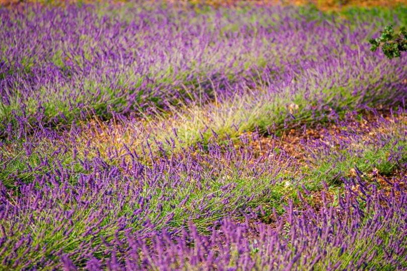 piante-officinali (20)