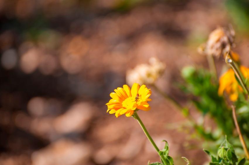piante-officinali (21)