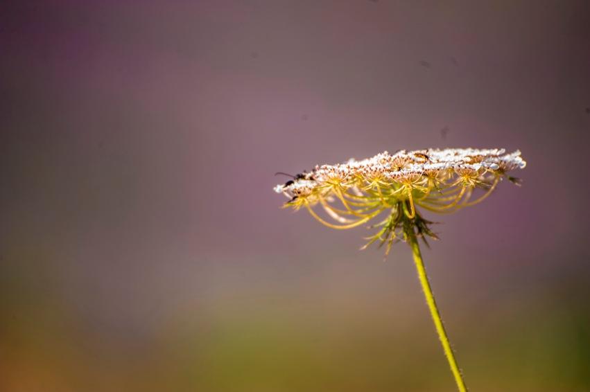 piante-officinali (22)