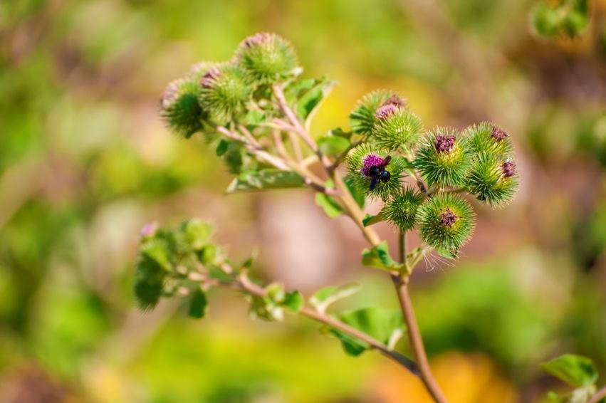 piante-officinali (23)