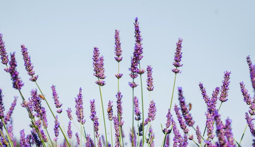 piante-officinali (25)
