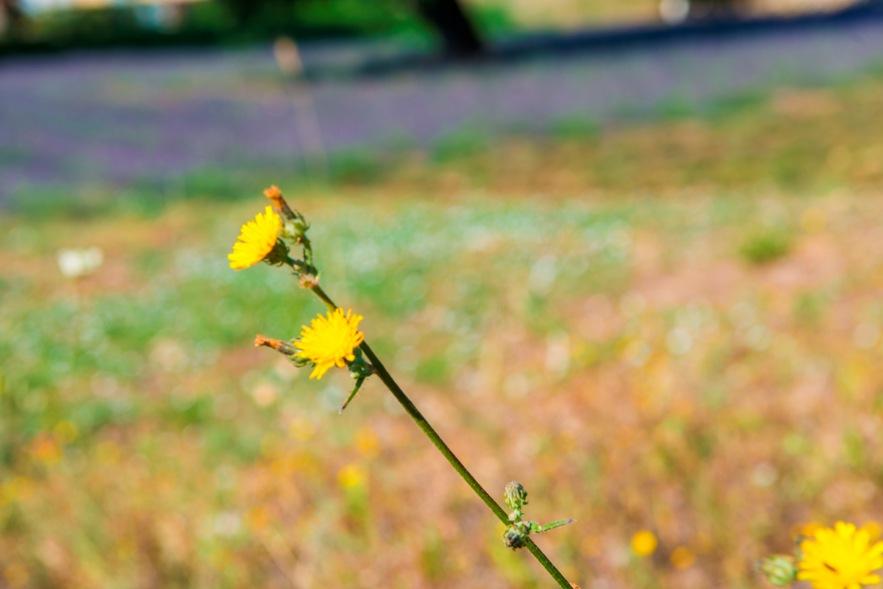 piante-officinali (7)