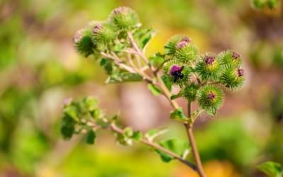 Pelle asfittica: il rimedio  viene dalla natura