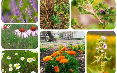 Stop agli antinfiammatori: scopri le erbe con proprietà Antinfiammatorie Naturali